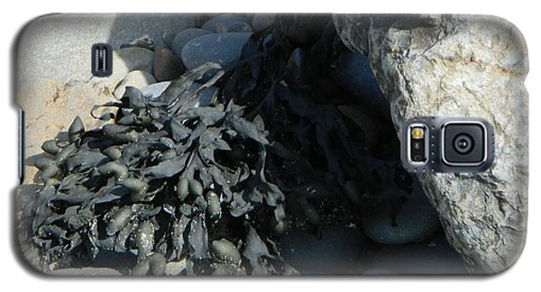 Seaweed And Rocks  Galaxy S5 Case