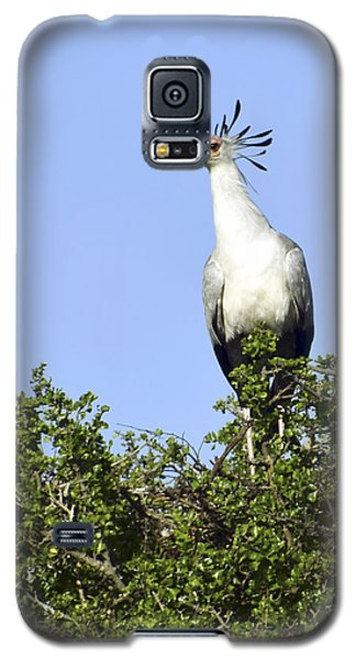 Secretary Bird Portrait Galaxy S5 Case by AnneKarin Glass