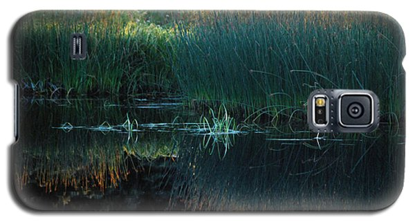 Galaxy S5 Case featuring the photograph Sedges At Sunset by Cynthia Lagoudakis