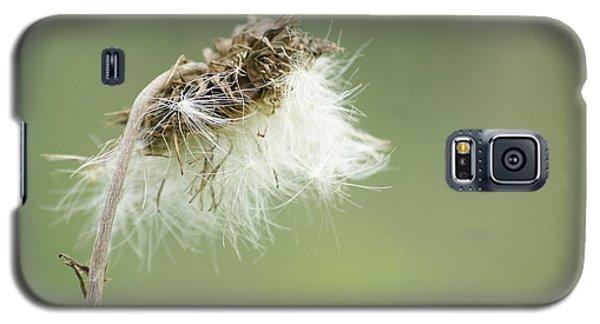 Seed Galaxy S5 Case by Heidi Poulin