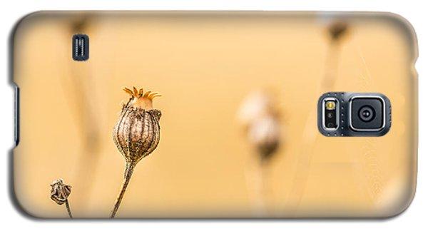 Seed Pod. Galaxy S5 Case