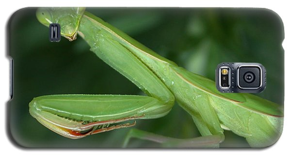 Seeing Green Galaxy S5 Case by Shane Bechler
