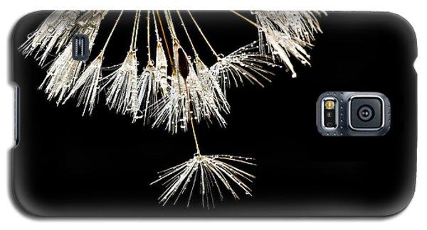 Seeking Freedom Galaxy S5 Case by Mary Jo Allen