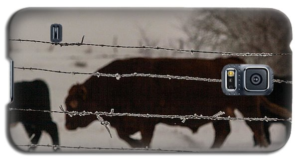 Galaxy S5 Case featuring the photograph Seeking Shelter From The Cold by Shirley Heier