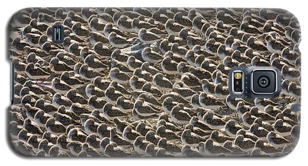 Semipalmated Sandpipers Sleeping Galaxy S5 Case by Yva Momatiuk John Eastcott