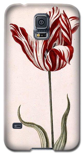 Tulip Galaxy S5 Case - Semper Augustus by Celestial Images
