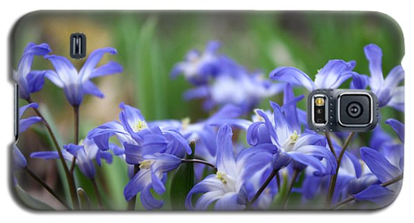 Send Flowers Fine Art Print Sweet Squill By Penny Hunt Floral Macro Galaxy S5 Case by Penny Hunt