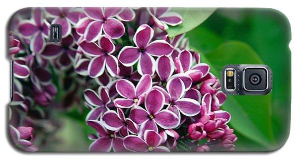 Sensation Lilac Galaxy S5 Case by Richard Engelbrecht