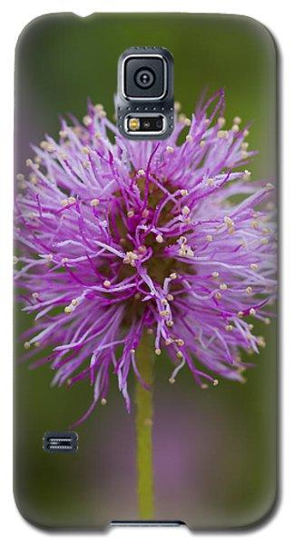 Sensitive Briar Flower Globe Galaxy S5 Case