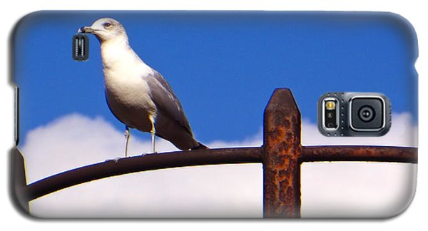 Galaxy S5 Case featuring the photograph Sentinel Sea Gull by Joy Hardee