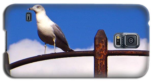 Sentinel Sea Gull Galaxy S5 Case by Joy Hardee
