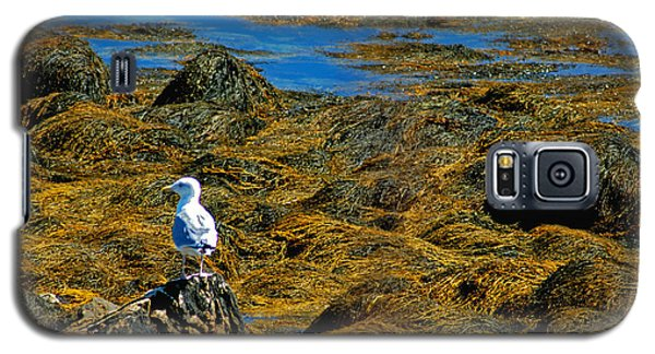 Galaxy S5 Case featuring the photograph Sentinel Seagull by Nancy De Flon