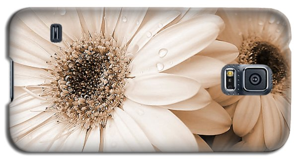 Sepia Gerber Daisy Flowers Galaxy S5 Case