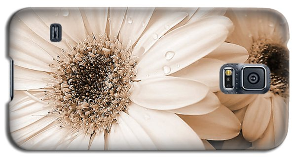 Sepia Gerber Daisy Flowers Galaxy S5 Case