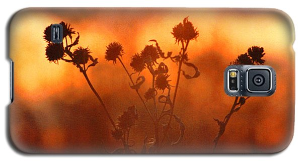 Galaxy S5 Case featuring the photograph September Sonlight by R Thomas Brass