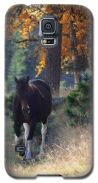 Galaxy S5 Case featuring the photograph September Surrender by Amanda Smith