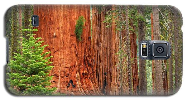 Sequoias Galaxy S5 Case