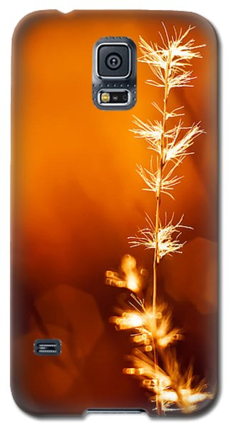 Galaxy S5 Case featuring the photograph Serene by Darryl Dalton