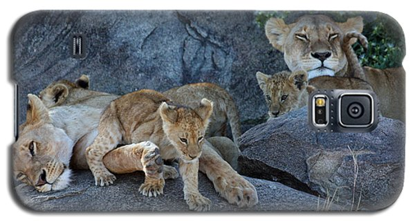 Serengeti Pride Galaxy S5 Case