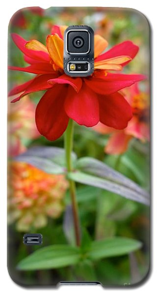 Serenity In Red Galaxy S5 Case