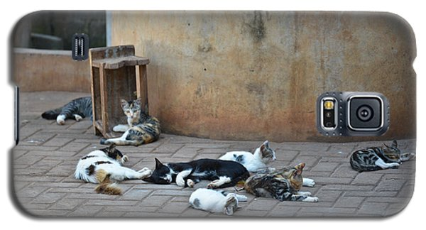 Galaxy S5 Case featuring the photograph Eight Cats In The Drum Maker's Yard by Ronda Broatch
