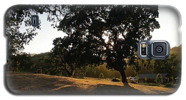 Shade Tree  Galaxy S5 Case by Shawn Marlow