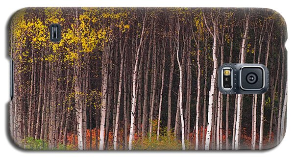 Shades Of Autumn Galaxy S5 Case