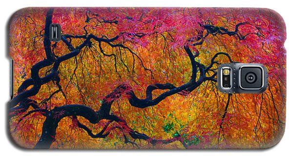 Shades Of Autumn Galaxy S5 Case by Patricia Babbitt