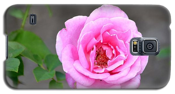 Shades Of Pink Galaxy S5 Case by Deena Stoddard