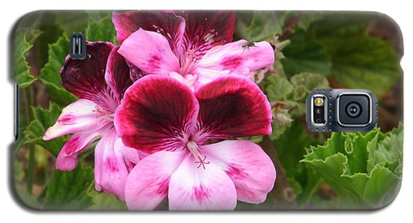 Galaxy S5 Case featuring the photograph Shades Of Pink by Lew Davis