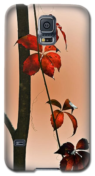 Galaxy S5 Case featuring the photograph Shades Of Red by Judy  Johnson