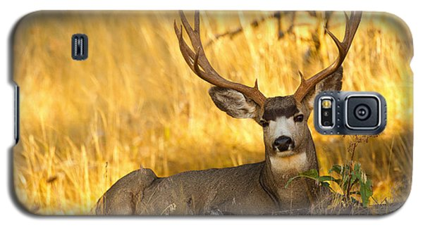 Galaxy S5 Case featuring the photograph Shady Buck by Aaron Whittemore