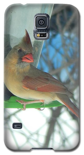 Galaxy S5 Case featuring the photograph Shall I Pose.... by Betty-Anne McDonald