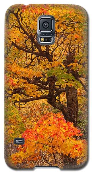 Shapely Maple Tree Galaxy S5 Case