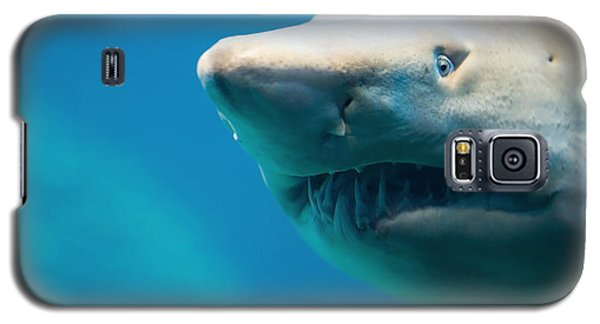 Bull Galaxy S5 Case - Shark by Johan Swanepoel
