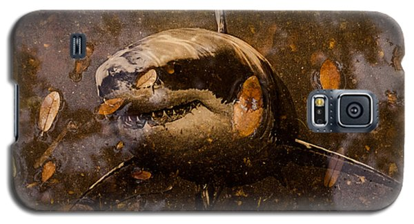 Shark Galaxy S5 Case by Randy Sylvia