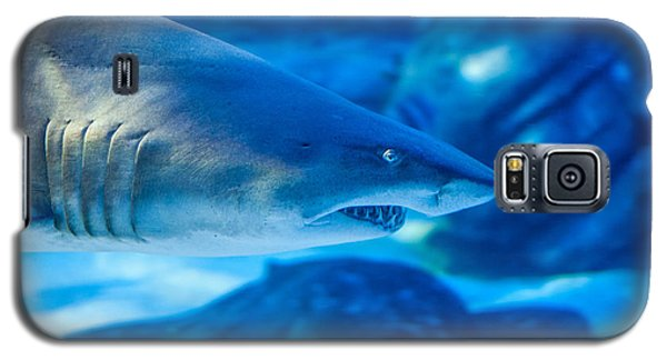 Shark Galaxy S5 Case