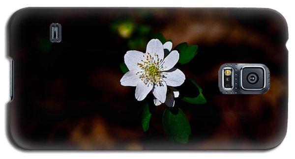 Galaxy S5 Case featuring the photograph Sharp-lobe Hapatica - Glspla684 by G L Sarti