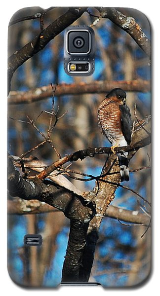 Galaxy S5 Case featuring the photograph Sharp Shinned Hawk by Mim White