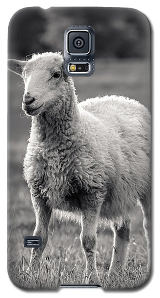 Sheep Galaxy S5 Case - Sheep Art  by Lucid Mood