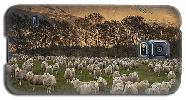 Sheep Flock At Dawn Arrowtown Otago New Galaxy S5 Case