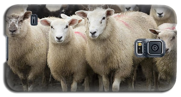 Sheep Galaxy S5 Case - Sheep In A Farm Yard by Louise Heusinkveld