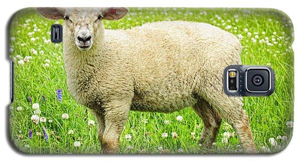 Sheep In Summer Meadow Galaxy S5 Case by Elena Elisseeva