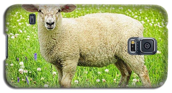 Sheep Galaxy S5 Case - Sheep In Summer Meadow by Elena Elisseeva