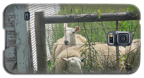 Galaxy S5 Case featuring the photograph Sheep Resting by Tina M Wenger