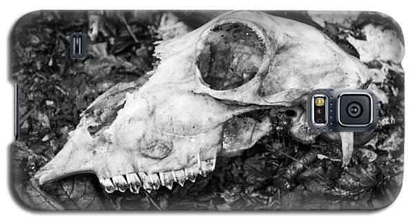 Galaxy S5 Case featuring the photograph Sheep's Skull by David Isaacson