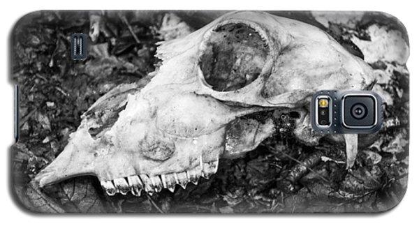 Sheep's Skull Galaxy S5 Case