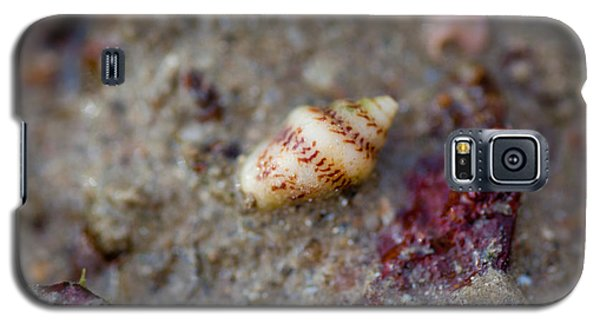 Galaxy S5 Case featuring the photograph Shell Alone by Carole Hinding