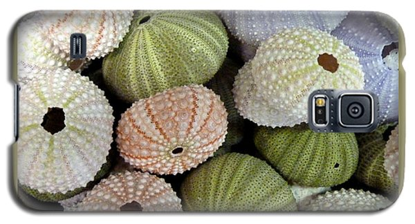 Shells 5 Galaxy S5 Case by Carla Parris