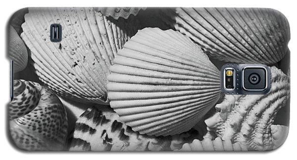 Shells In Black And White Galaxy S5 Case by Mary Bedy